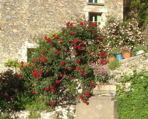 la maison des roses4