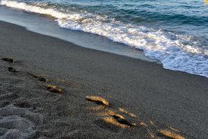 Plage Argelès-sur-Mer 3