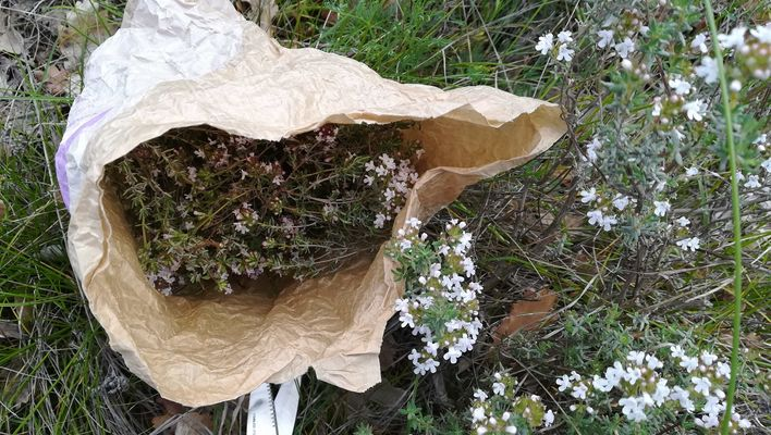 03. Blandine Margoux - Récolte de thym 300418 - light