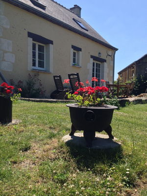 Back garden geranium