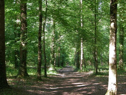 Bois des semis-Chapelle Aligné-mai04
