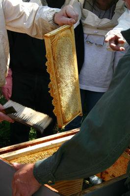 Grain de pollen_anim apiculture (2)