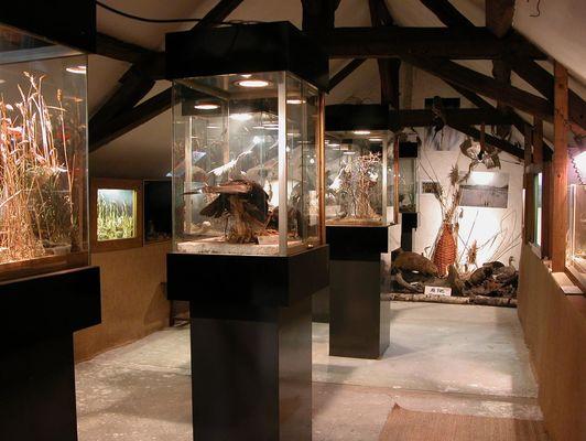 Petit Musée Faune Locale (2) (Large)