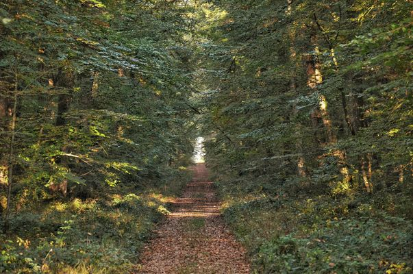 nature-foret-chandelais-baugeenanjou-anjou