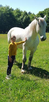 des chevaux et poneys cool