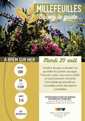 Millefeuille_BRM20aout