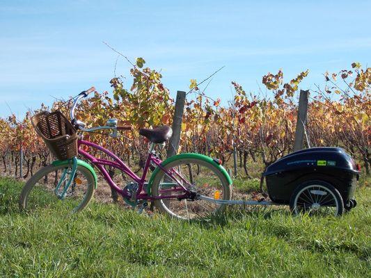 Original Vélo Tour - Balade dans les vignes de Pissotte - Pissotte -  PDS - 3