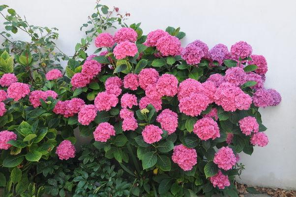 Le Saphir - fleurs