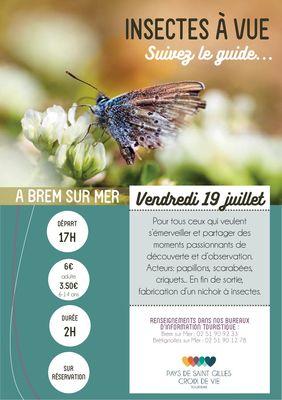 Insecte-BRM19juillet