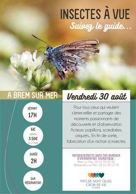 Insecte-BRM30aout