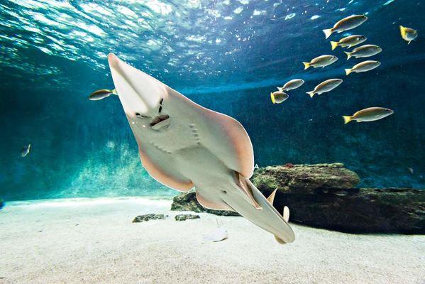 aquarium-de-vendee-talmont-saint-hilaire