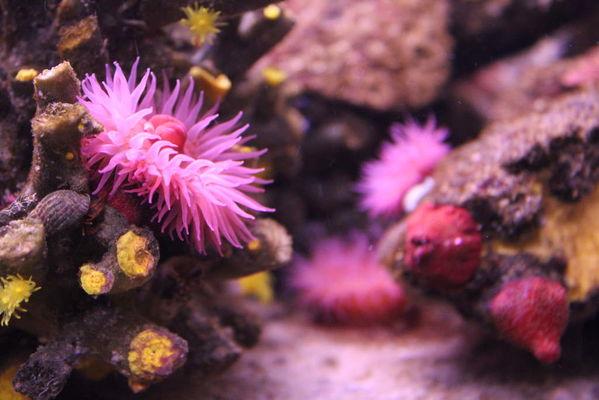 aquarium-vendee-talmont-1