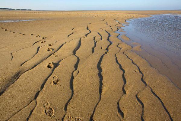 biotopia plage dune notre dame de monts vendee louis marie preau