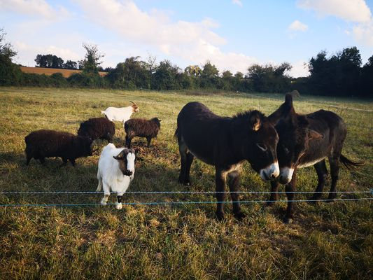 camping-les-rulieres-st-valerien-85-animaux-camp