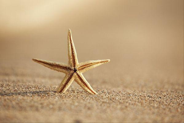 étoile_de_mer
