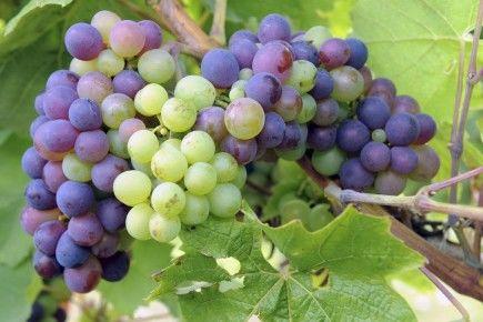 festival-vins-de-loire