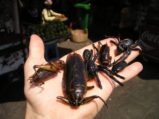 insect-market-440_960_720