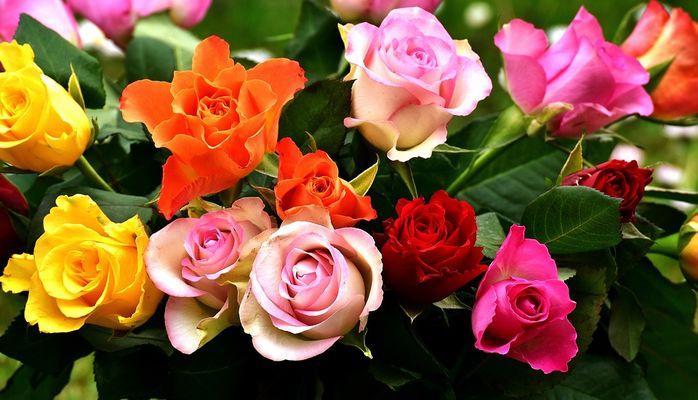 roses-2911123_960_720
