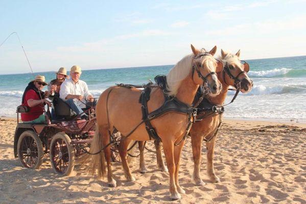 chevaux-Benden-ploemel-morbihan-bretagne-sud