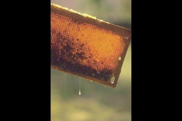 """Gite """"La Miellerie"""", Maison à 1h de Reims, Verdun et Charleville-M., découverte de l'apiculture - Vaux-lès-Mouron - Ardennes"""