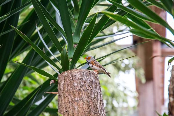 jardin-aux-papillons-morbihan-bretagne-sud-26