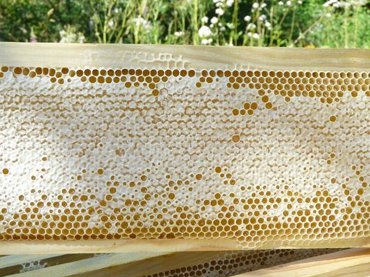 Le rucher de Saleix