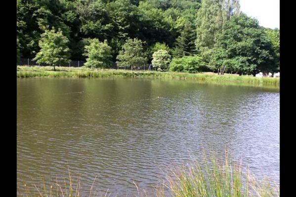 Chalet Deluve, au coeur de la forêt à côté de la Belgique, avec 2 étangs - Vireux-Molhain - Ardennes
