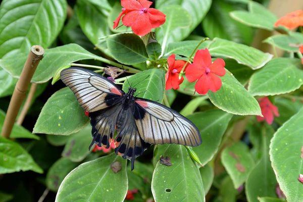jardin-aux-papillons-morbihan-bretagne-sud-07