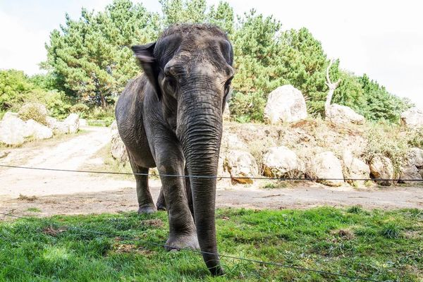 Parc-Zoologique-Pont-Scorff-Morbihan-Bretagne-Sud-07