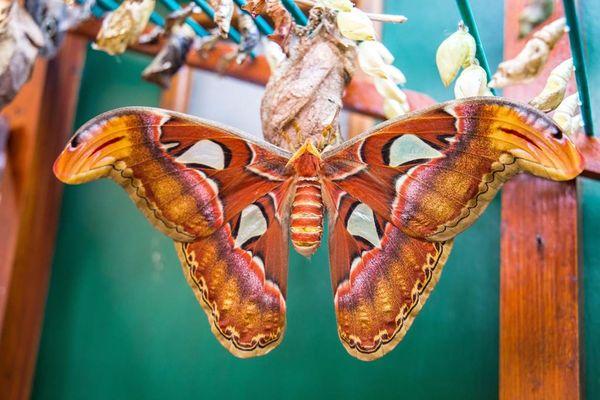 jardin-aux-papillons-morbihan-bretagne-sud-22