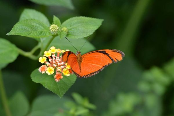 jardin-aux-papillons-morbihan-bretagne-sud-14