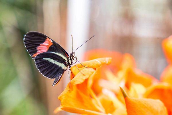 jardin-aux-papillons-morbihan-bretagne-sud-27
