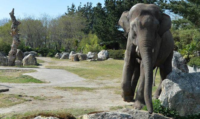 Parc-Zoologique-Pont-Scorff-Morbihan-Bretagne-Sud