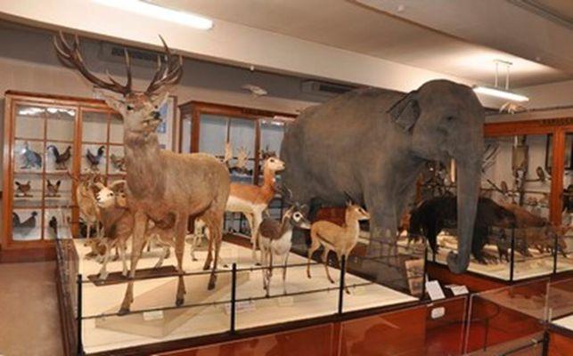 Museum Victor Brun -  Musée - Montauban - Visiter Montauban - Découvrir Montauban