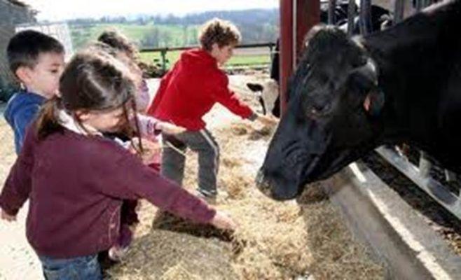 enfants et vache