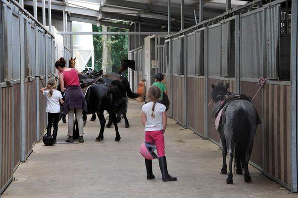 préparation des chevaux