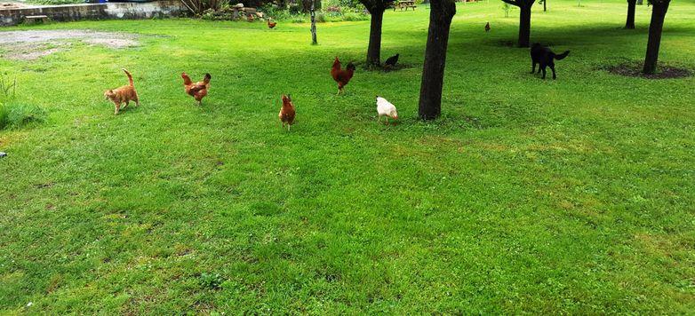 Le Moulin de Chappes