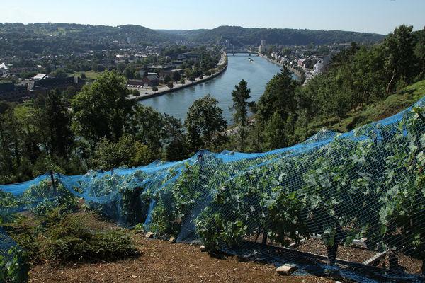 Closerie des Prébendiers - Huy - Vignoble vue sur La Meuse