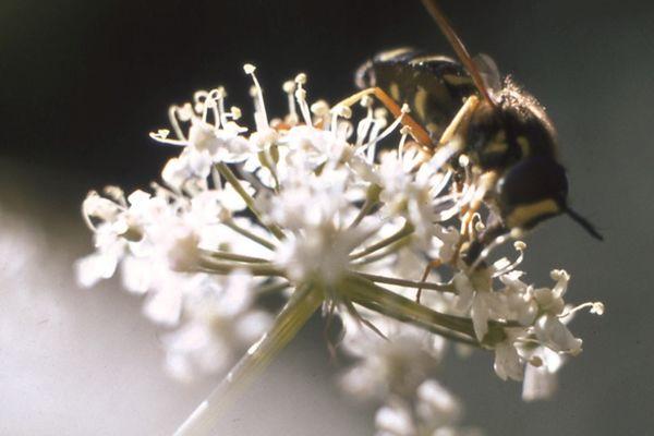 val-cenis-miel-montagne