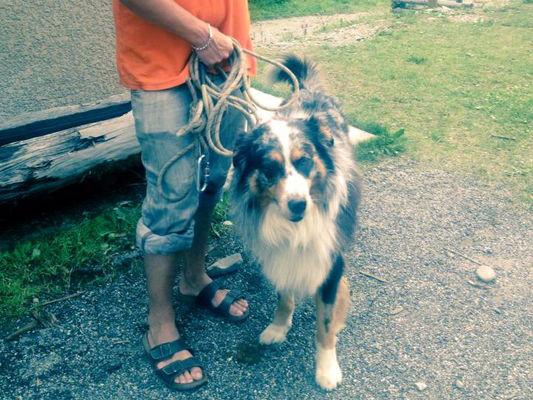 Gardiennage de chien - Base de loisirs