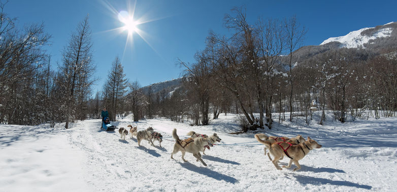 "Chiens de Traineaux ""Mushing Addict"""