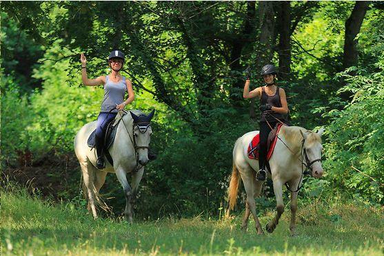champagne 52 langres tourisme equestre camping lac liez.