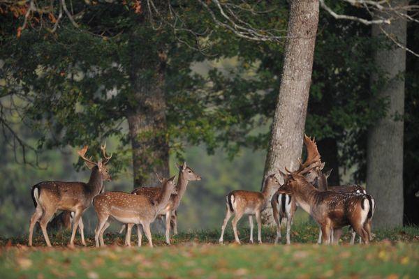 champagne 52 nature parcs animaliers parc aux daims phl 7206.