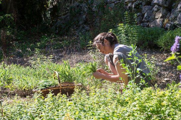 Sylvie DUMAS - Plantes aromatiques