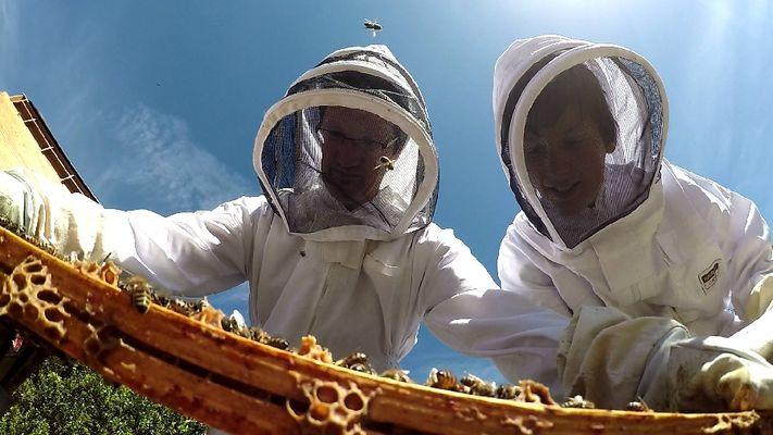 Stage découverte - Les bases pour créer son premier rucher