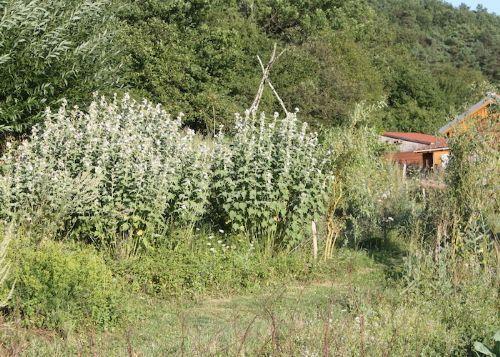 champagne 52 vals des tilles villemervry jardin herberie de la tille jardin plantes aromatiques 048.