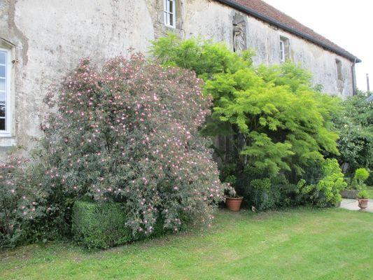 champagne 52 jardin poully en bassigny jardin clos du presbytere 1.