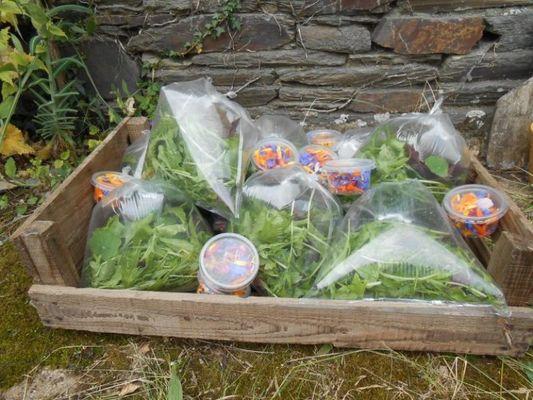 Des heures dehors - bulles de salades fleuries - Ploërmel