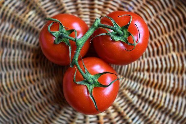 Maraicher - tomates