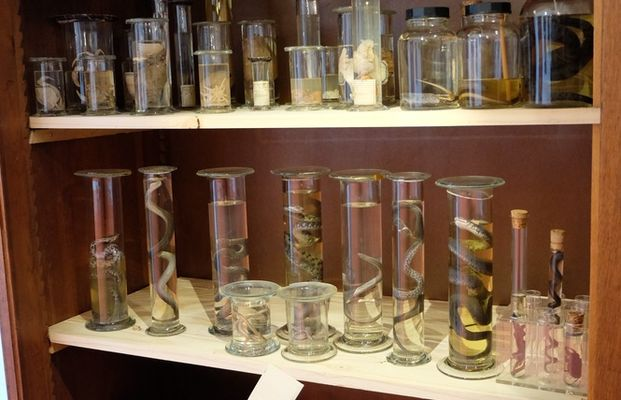 Cabinet des Curiosités